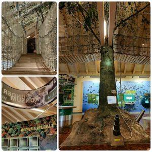 Erlebniswelt mit Hängebrücke - Nationalparkzentrum