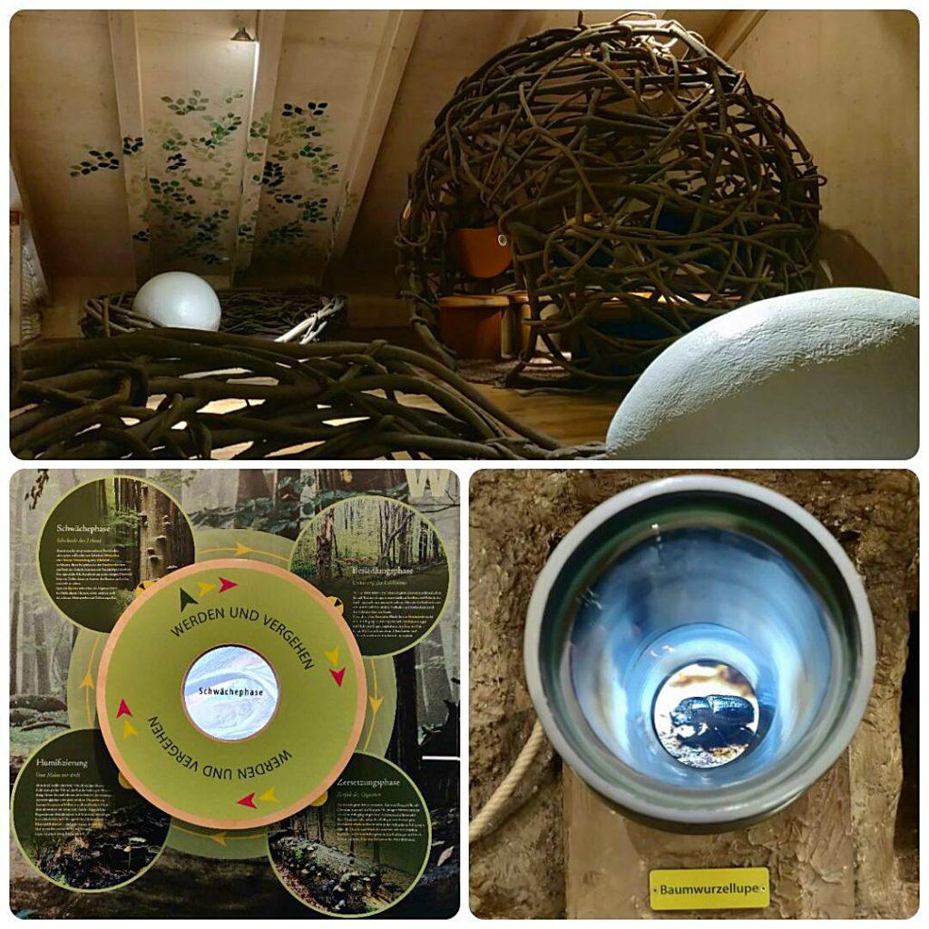 Interaktive Dauerausstellung in der Erlebniswelt im Nationalparkzentrum