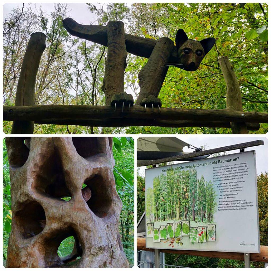 Modelle und Infoschilder auf dem Baumkronenpfaden - Baumkronenpfad im Nationalpark Hainich