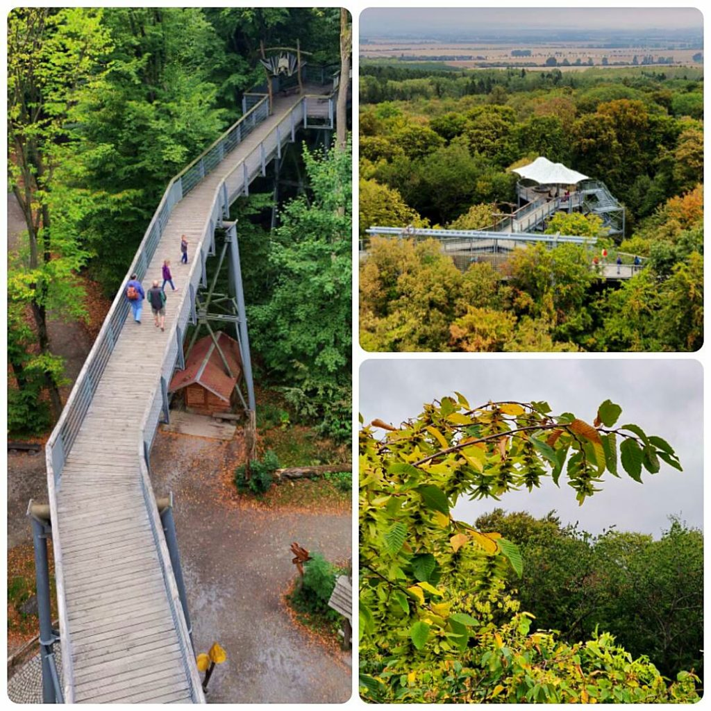 Wege auf Stelzen - der Baumkronenpfad im Nationalpark Hainich