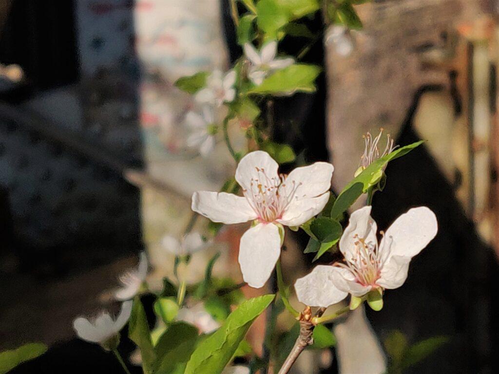Naturerlebnis Frühling - wenn die Natur zu neuem Leben erwacht