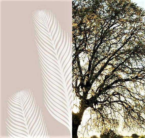 Für jedes verkaufte Poster wird ein Baum gepflangt